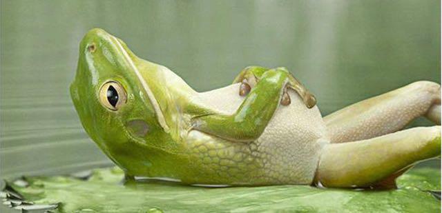 frog-on-back-ed